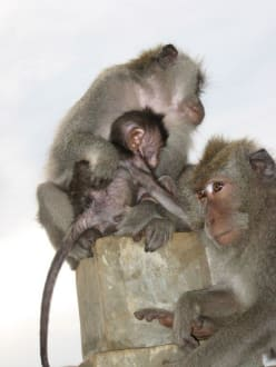 Affenfamilie - Uluwatu Tempel