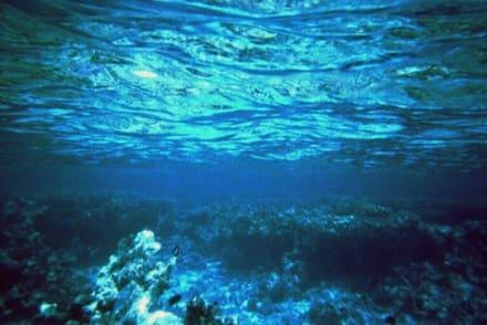 Nocheinmal zwischen Riff und Wasseroberfläche - Schnorcheln Hurghada