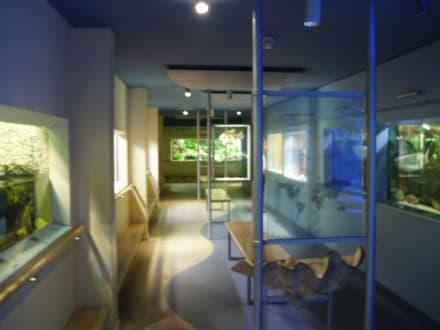 Naturkundemuseum Braunschweig - Naturhistorisches Museum