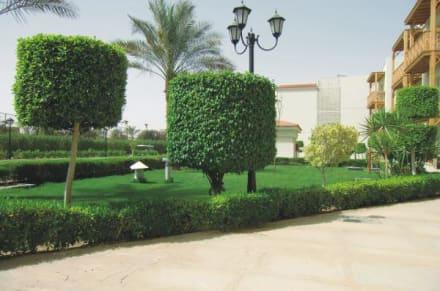 sch ne b ume bild hotel dana beach resort in hurghada. Black Bedroom Furniture Sets. Home Design Ideas