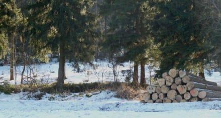 Verschneiter Wald - Die Rusel