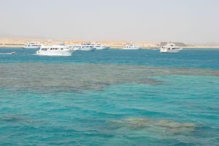Der Hafen - Schnorcheln Dolphinhouse Marsa Alam