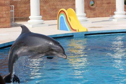 Naturreservat/Zoo - Sealanya Delfinpark