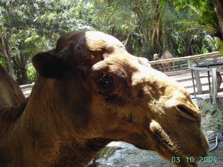 Tiger Zoo - Tiger Zoo Si Racha