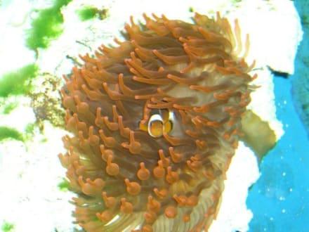 Nemo im Kölner Zoo... - Zoologischer Garten Köln