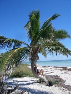 Bilderbuchpalme Bahia Honda Key - Bahia Honda Key State Park