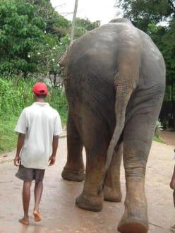 Kleiner Mann Große Tiere - Elefantenwaisenhaus Pinnawela