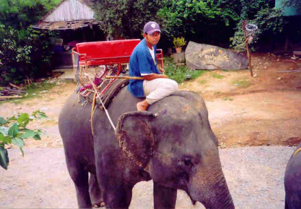 Unserer - Hutsadin Elephant Foundation