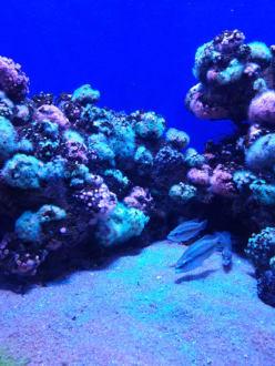 ....... - Palma Aquarium