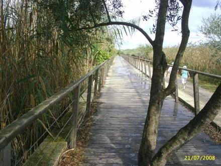 Es gab interessante Wege - Naturpark S'Albufera