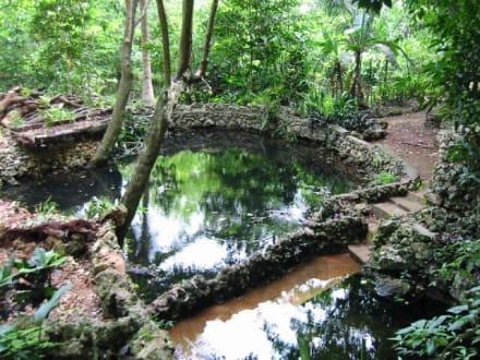 Naturpark - Nationalpark El Choco