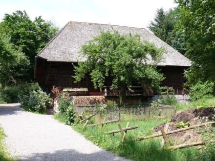 Alte Höfe in schöner Landschaft - Freilichtmuseum Vogtsbauernhöfe