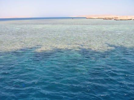 Insel mit Riff - Schnorcheln Hurghada