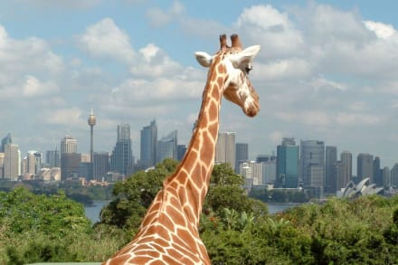 Zoo mit Panoramablick - Taronga Zoo