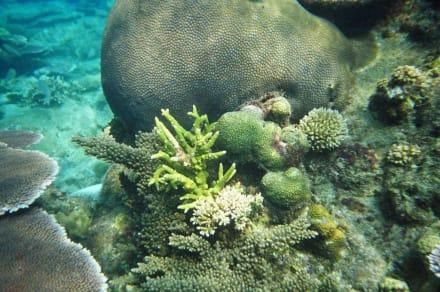 Unterwasserwelt - Schnorcheln Perhentian