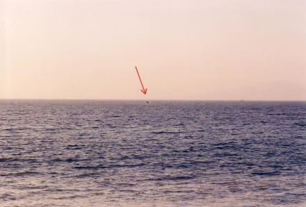 da ist er! - Whale Watching Puerto Vallarta