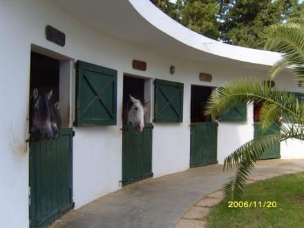Pferdestall - Reitstall des Hotel Le Sultan