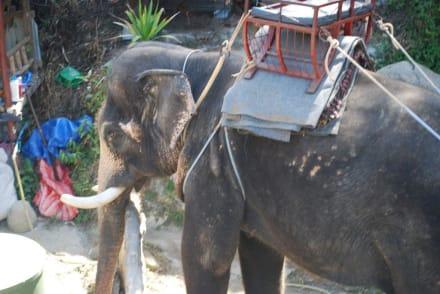 Sonstiges Freizeitbild - Phuket Adventure