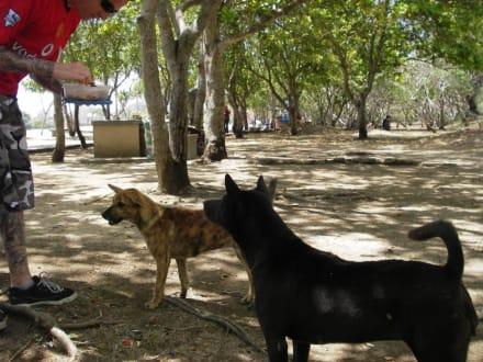 Nusa Dua Beach Standhunde - Strand Nusa Dua