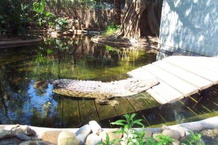 Und wo bitte ist Crocodile Dundee? - Taronga Zoo