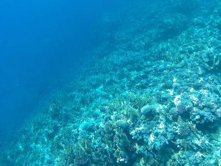 Schnorcheln im Außenriff - Schnorcheln Nabq Bay