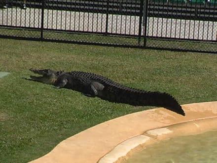 Crocodile Hunter - Australia Zoo