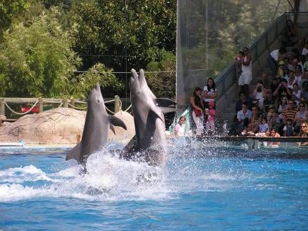 Im Zoo von  Lissabor - Zoologischer Garten Lissabon