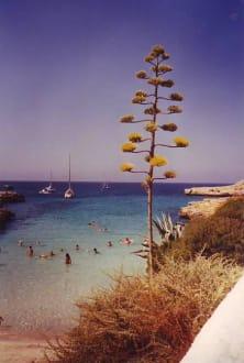 Bucht Sa Caleta - Playa de la Caleta
