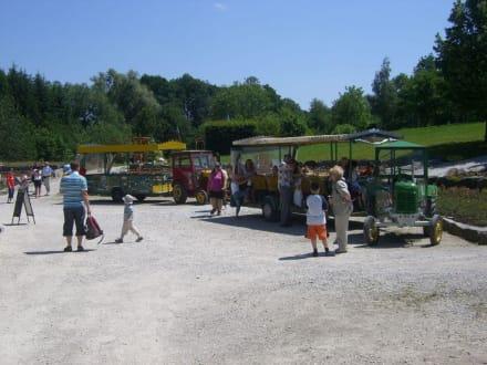 Traktor für Rundfahrten - Familienparadies Agrarium