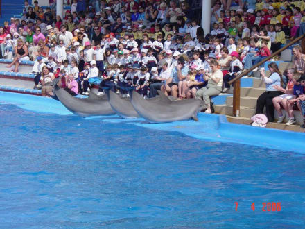 Delfine - Marineland
