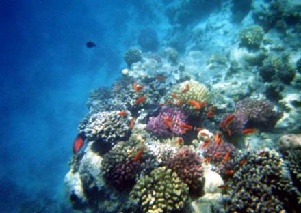 Hausriff - Schnorcheln Hausriff Bel Air Beach /Arabia Hurghada