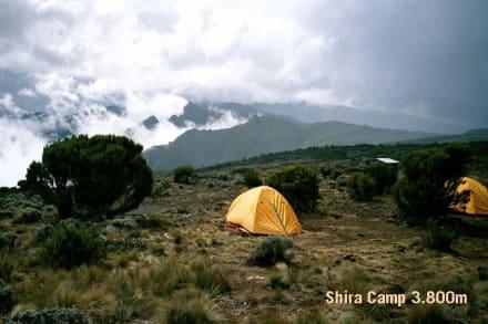 Kilimanjaro, Shira Camp - Kilimanjarobesteigung