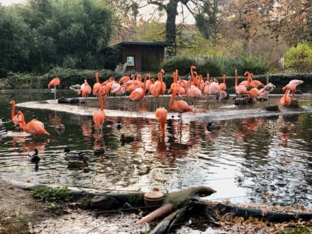 eintrittspreise zoo dresden