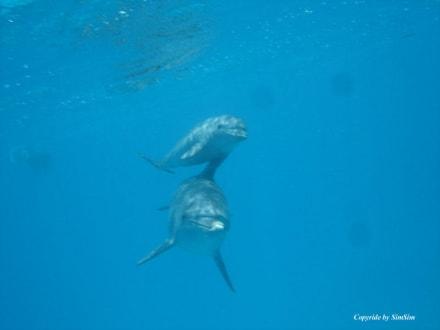 Delphin - Delfin Tour Hurghada