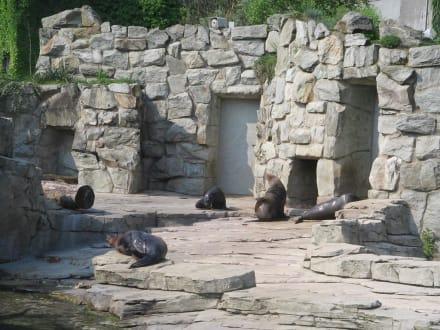 Gehege der Seelöwen - Zoo Frankfurt