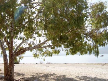 Strand am Bafasee - Bafa Gölü