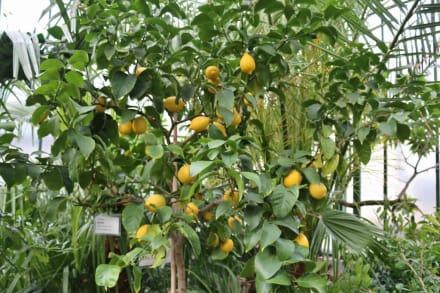 Früchte aller Art - Wilhelma