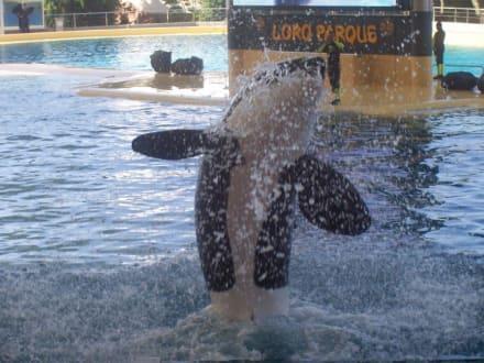 Orca im Loro-Park - Loro Parque
