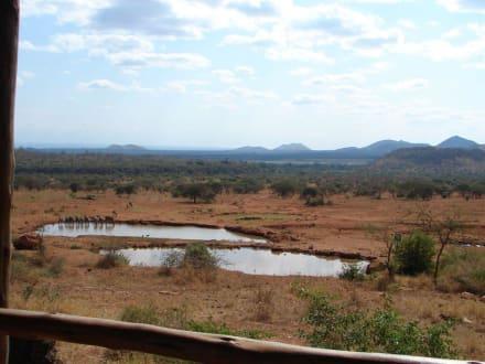 Wasserloch - Tsavo West Nationalpark