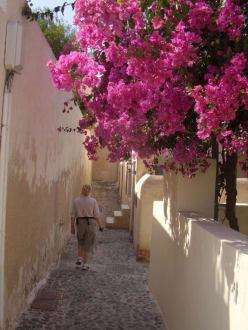 wunderschöne Bouganvilea - Altstadt Oia