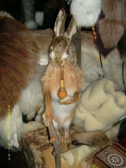 ausgestopfter Hase - Mittelalterlicher Weihnachtsmarkt Telgte