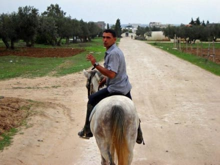 Habib - Ranch Mabrouka