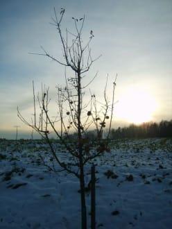Sonnenuntergang - Rothenbügl
