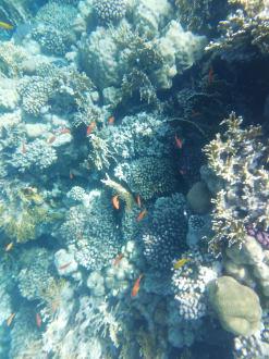 Hausriff - Schnorcheln Sharm el Sheikh
