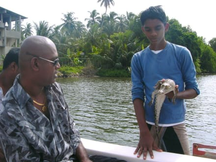 Bootsfahrt - Bentota Fluss- und Mangroven Tour