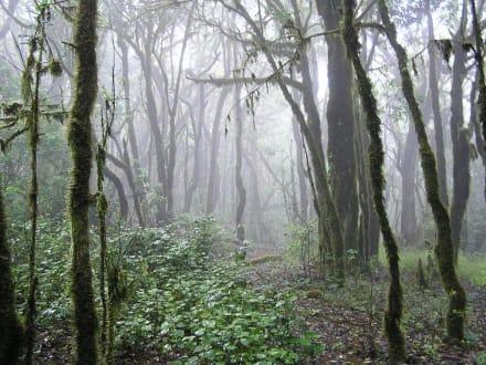 Regenwald - Nationalpark Garajonay