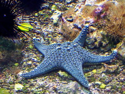 Impressionen - Aquarium Burg
