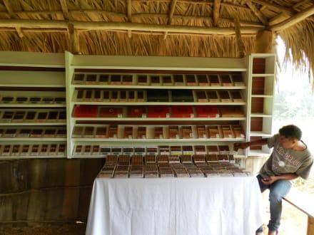 Zigarrenverkostung - Ausflug nach Samana