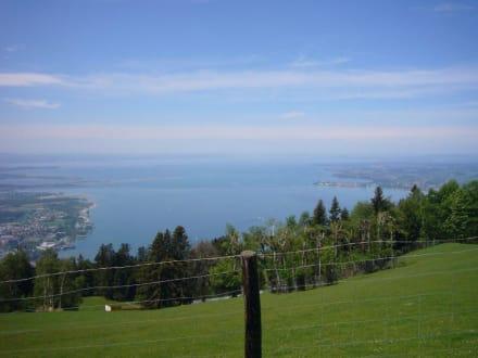 Blick vom Pfänder auf den Bodensee - Pfänder