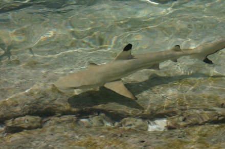 Hai - Unterwasser